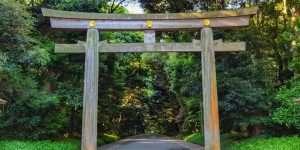 Meiji Shrine in Tokyo | Tanpopo Studio