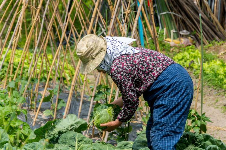 Japanese women at farm