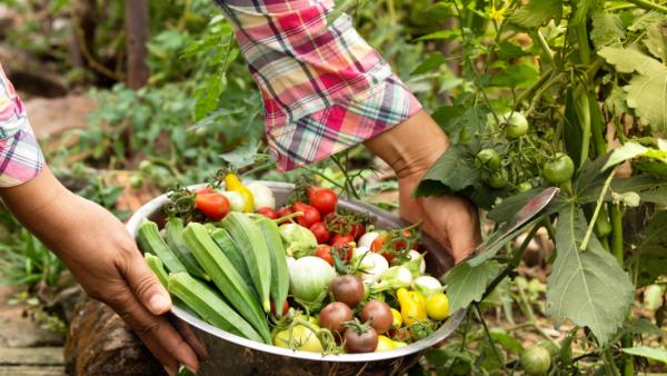Farmer with Vegetable Basket